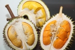 Durian, the king of fruits!